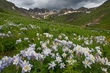 columbine american basin before the storm mg491 0711 m 2.jpg