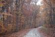fall passage dream 1011_A1G2210 m2.jpg