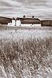 white barn BW 0112_A1G2414 m.jpg