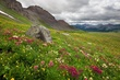 wildflowers stony pass 0711 mg768 m 2.jpg