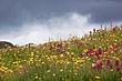 wildflowers under stormy clouds 0711_MG_2099 m.jpg