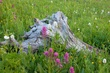 wildflowers with stump 0711_A1G9479 m.jpg