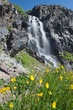 yellow flowers by the falls 0711 mg108 m.jpg