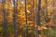 sunny fall forest abstract 1010_A1G7457 m.jpg
