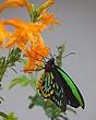 vivid butterfly 0111_MG_2401 m.jpg