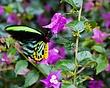 vivid butterfly on purple flowers 0111_MG_2404 m.jpg