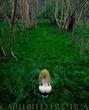 Wood Fairy.jpg