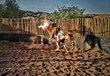 Paint A Wild Horse.jpg