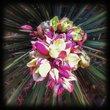 Yucca In Bloom.jpg