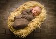 Baby Graw D.jpg