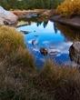 Carson River Gold 003.jpg