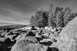 A Rocky Perspective BW.jpg