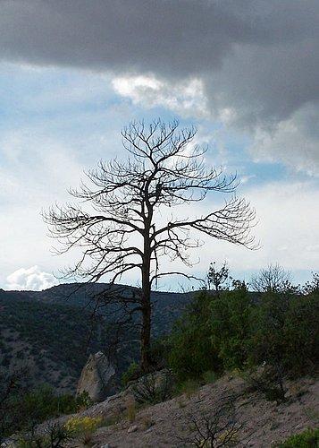 Bare_Tree_Tent_Rocks.jpg