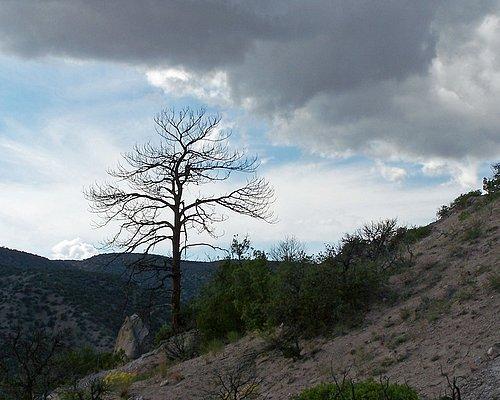 Bare_Tree_Tent_Rocks_Horiz.jpg