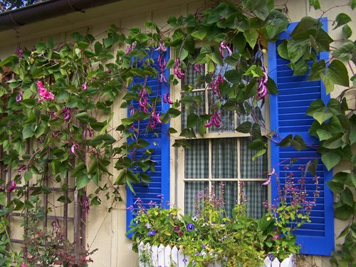 Blue Shutters and Vines.jpg