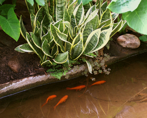 Four Fish with Snake Plant810.jpg