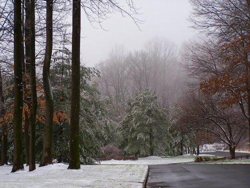 Misty Winter Day.jpg