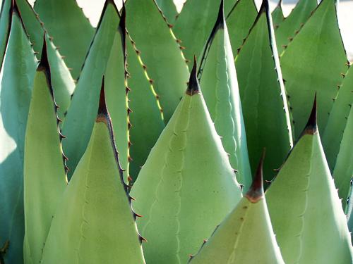 Spikey Cactus.jpg