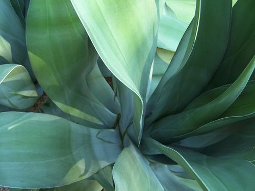 Tucson Cactus.jpg