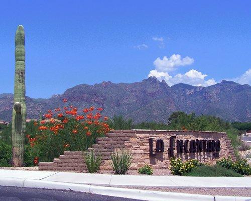 Tucson Landscape.jpg