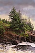 Evergreens on the Northshore  of Minnesota.jpg