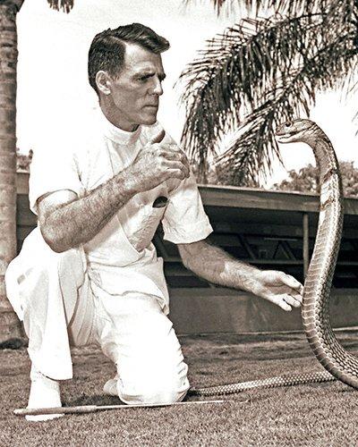 CELEBRITIES (2-212LR)  Bill Haast catching large king cobra-close up.jpg