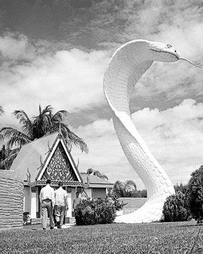 CELEBRITIES 2 243LR Bill Haast Miami Serpentarium Entrance With Giant King Cobra