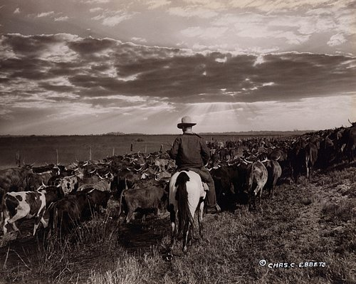 MISCELLANEOUS 9-23  Cowboy driving the herd into the sunset Florida c. 1941.jpg