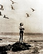 PUBLICITY (11-148LR) woman feeding sea gulls from rock circa 1930  .jpg