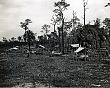 SEMINOLES (13-183LR) desolate camp out the Tamiami Trail.jpg