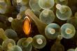 Anemonefish-39ae5.jpg
