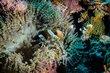 Anemonefish-8725.jpg