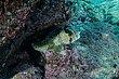 Balloonfish-0823.jpg