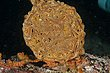 Basket Star 2-1041.jpg