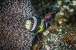 anemonefish 2-8137.jpg