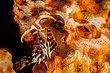 Aeolid Nudibranch.jpg