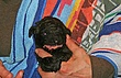 Meag-pups-2011-day14d.jpg