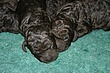Meag-pups-2011-day3d.jpg