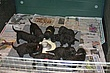 Meag-pups-2011_Day23b.jpg
