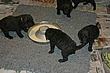 Meag-pups-2011_Day23c.jpg