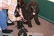 Meag_pups_2011_day10c.jpg