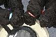 Meagan-Puppies-2011-day-24b.jpg