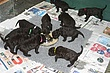 Meagan-Puppies-2011-day-25a.jpg