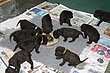 Meagan-Puppies-2011-day-25b.jpg
