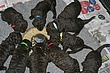 Meagan-Puppies-2011-day-25d.jpg