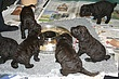 Meagan-Puppies-2011-day-30b.jpg