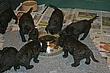 Meagan-Puppies-2011-day-30c.jpg