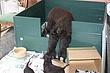 Meagan-puppies-2011-day-36b.jpg