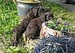 Meagan-puppies-2011-day-44b.jpg