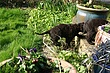 Meagan-puppies-2011-day-44c.jpg